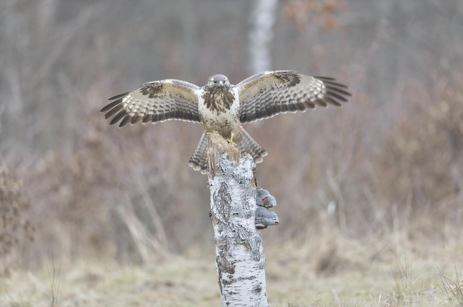 Ptaki Drapieżne Akademia Nikona