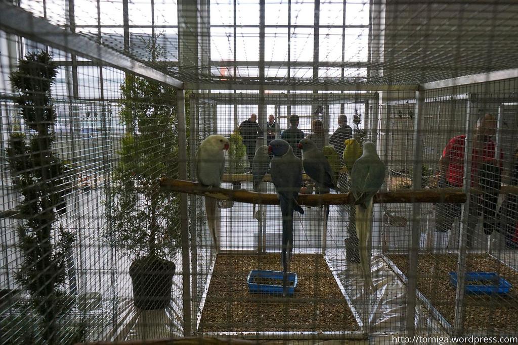 Grupa papug na pierwszym i drugim planie kontra ludzie na trzecim i czwartym.