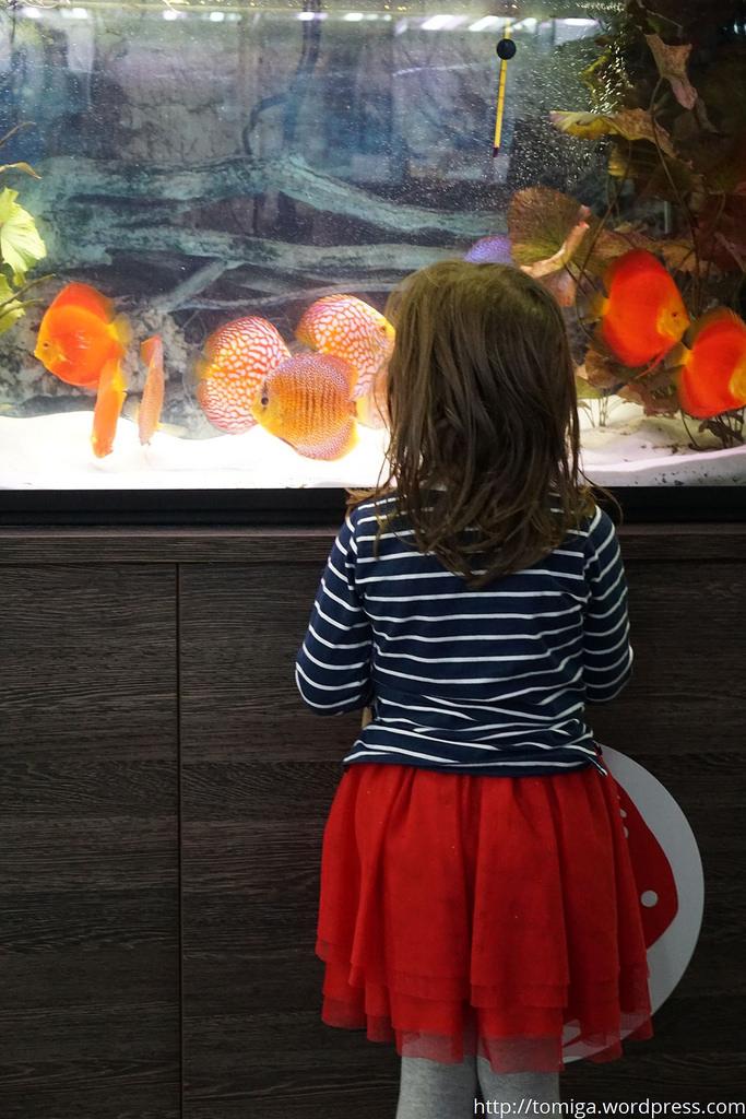 I ponownie zestawienie kolorystyczno-geometryczne. Dziewczynka w czerwonej sukience i w bluzce w czarno-białe paski obserwuje… czerwone ryby w czarne lub białe paski.