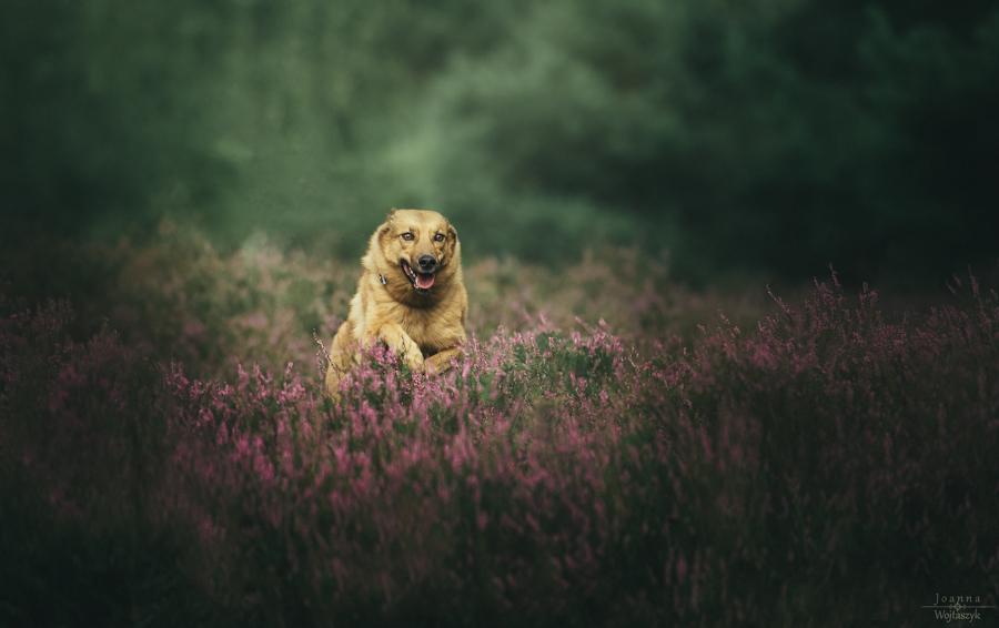 fot. Joanna Wojtaszyk