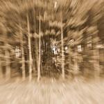 Pejzaż fotograficzny: Między dokumentem a sztuką, Wigry